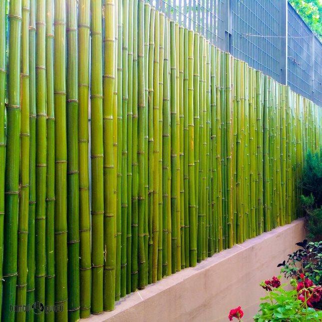 Cercos de bamb para decoraci n bamb guaz tradem style - Cana bambu decoracion ...