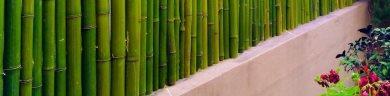Cercos de bambú para decoración – Bambú Guazú