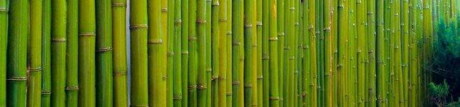 Cercos-de-bambu-para-decoracion-Bambu-Guazu-portada