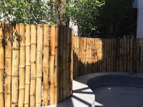 Bambu-Guazu-3