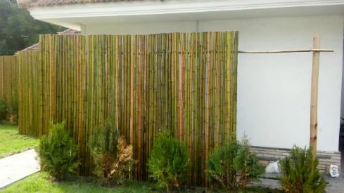 Cercos de ca a de bamb para divisiones exteriores bamb - Canas de bambu decoracion exterior ...